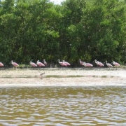 flamingo octoberfest and ray 061