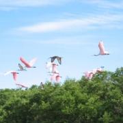 flamingo octoberfest and ray 063