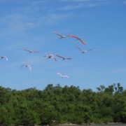 flamingo octoberfest and ray 064