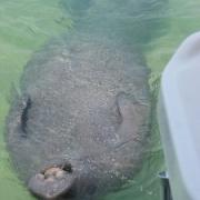 GW bonefish 011